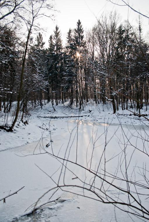 Staw w Miechowickiej Ostoi Leśnej