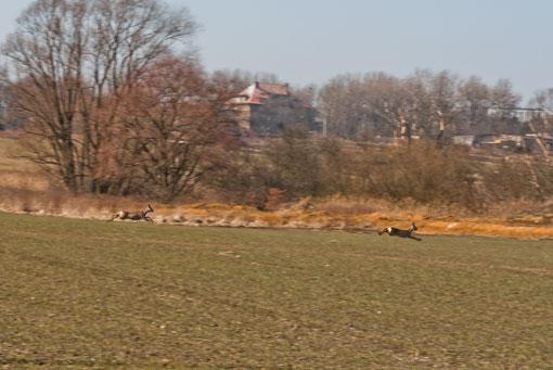 Bambie w Miechowicach